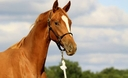 MW Bella Rossa in  Horses For Sale