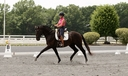 MW Fabulous in  Horses For Sale
