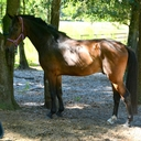 London ROF in  Horses For Sale