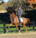 Chasing Wonder in  Horses For Sale