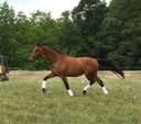 Darby Dulcilena in  Horses For Sale