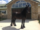 Aloha ISF in  Horses For Sale