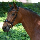 Cenna in  Horses For Sale