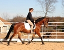 JKB Giselle in  Horses For Sale