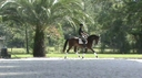 Allouette in  Horses For Sale