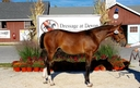 Lochlan in  Horses For Sale