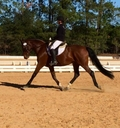 Astor in  Horses For Sale