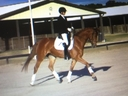 Belatrix RH in  Horses For Sale
