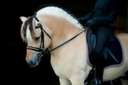 PCF Vidar in  Horses For Sale
