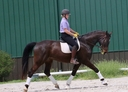 Dylan HTF in  Horses For Sale