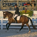 Qindle HTF - 2013 Hanoverian Mare in  Horses For Sale