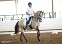 Montesol in  Horses For Sale