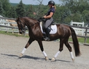 Ensign's Stately Mandolyn in  Horses For Sale