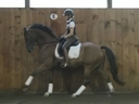 Dixi C in  Horses For Sale