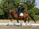 Diamond Star in  Horses For Sale