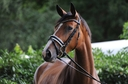 Donatella K in  Horses For Sale
