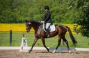 Two Tempi  in  Horses For Sale