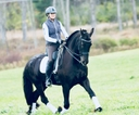 Xenia fan Willow View in  Horses For Sale
