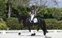 Tabitha ISF in  Horses For Sale