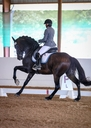 Boldness Be My Friend  in  Horses For Sale
