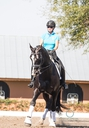Macho Polo SRF in  Horses For Sale