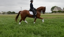Euro Xpress in  Horses For Sale