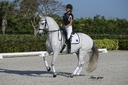 Mistico TP in  Horses For Sale