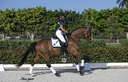 Imperial ISF in  Horses For Sale