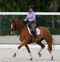 Lyra in  Horses For Sale