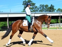 WEC´s LIBERTY in  Horses For Sale