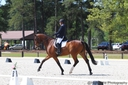 ROR Incredible in  Horses For Sale