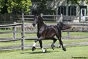 Zoe ISF in  Horses For Sale