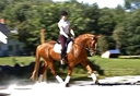Spartacus LHF in  Horses For Sale