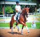 LEGEND in  Horses For Sale