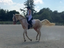 Hijack in  Horses For Sale