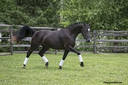 J'adore ISF in  Horses For Sale