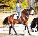 Goldpower in  Horses For Sale
