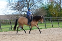 Ciarra R in  Horses For Sale