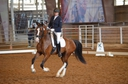 Istrano in  Horses For Sale
