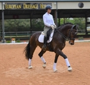 DREAMER WEC in  Horses For Sale