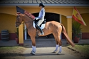 QUANTIUM WEC in  Horses For Sale