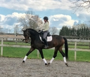 Zigzag in  Horses For Sale