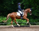 Wrosetta GGF in  Horses For Sale