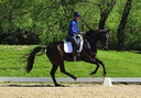 Don Ramiro KF in  Horses For Sale