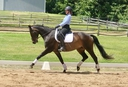 SommerWind  in  Horses For Sale