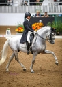 FER CORONADO in  Horses For Sale