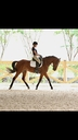Ballerine d l'Ocean in  Horses For Sale