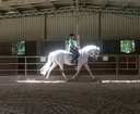 Relampago Arm VII in  Horses For Sale