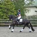 Amore ISF in  Horses For Sale