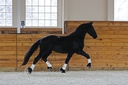 Dante ISF in  Horses For Sale